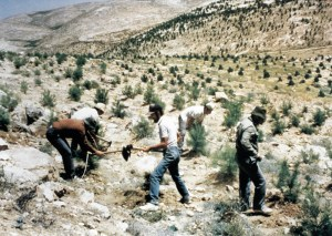 Planting trees on Israel's desert hills