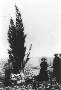 Theodor Herzl planted a cypress tree, 1898. Photo 'Trees for the Holy Land'.