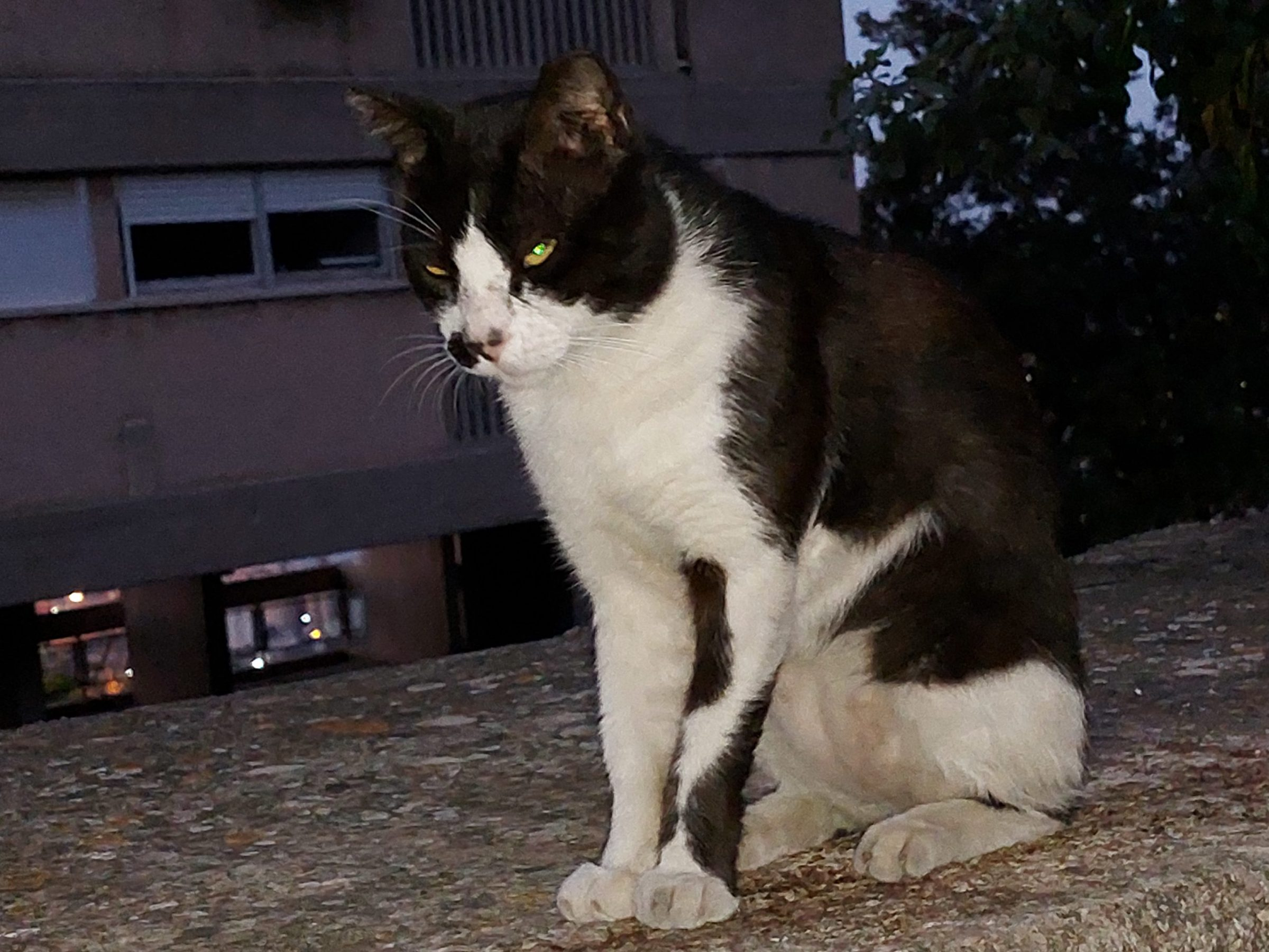 Israel's population of street cats is now believed to have reached the one million mark