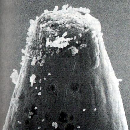mikroba01