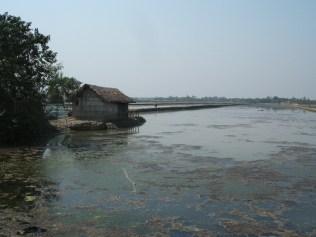 Bangladsh (87)
