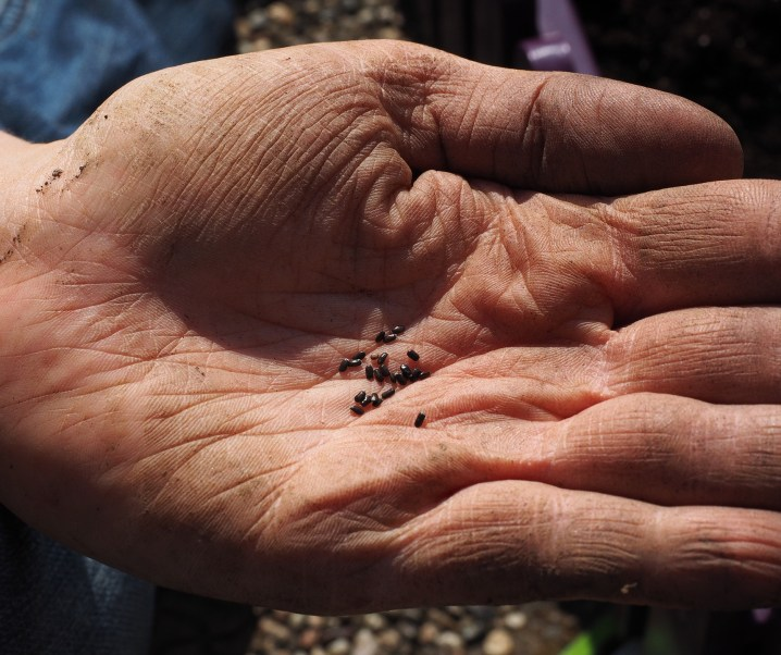Women's Month 2019 | Seed keepers, memory keepers: native women and food sovereignty by Leila Rezvani