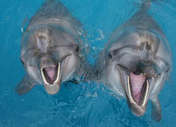 أسعار تذاكر السباحة مع الدلافين