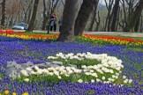 istanbul_tulip_festival_lale (25)
