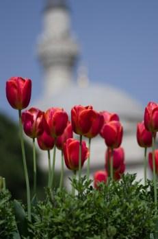 istanbul_tulip_lale_festival_ozgur_ozkok-127