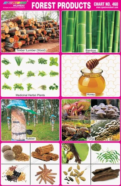 Several auxiliary image collections created by companies or individuals are also. Chart No 460 Forest Products