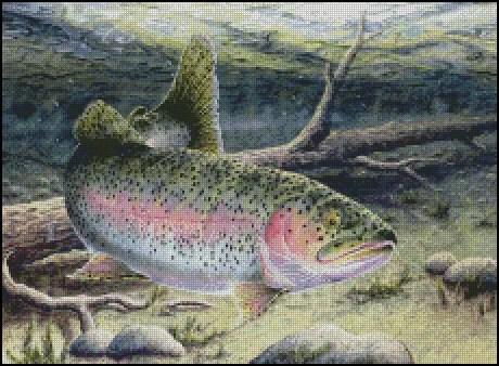 Rainbow Trout Counted Cross Stitch Pattern  Shinysuns