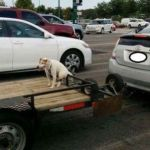 Viral Facebook Photos of Dog Tied to Trailer Lead to Investigation