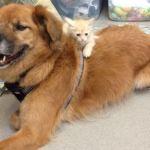 Katrina Survivor Boots Is Now Arizona Shelter's 'Kitten Whisperer'
