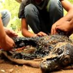 Extreme Makeover: Lucky Pup Survives Spill Into Hot Tar