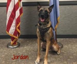 secret service dog jordan