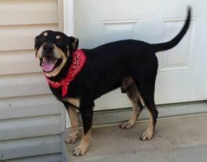 lazarus dog survived euthanization attempt