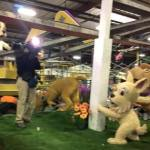 DigAlert Rose Parade Float Features Digging Dogs