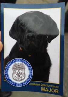 major arson detection dog los angeles fire
