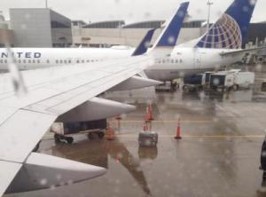 united airlines dog left on tarmac in rain