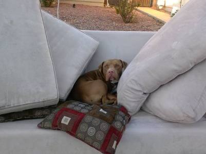 dog left on couch when owners moved away