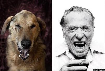 poetic dogs charles bukowski