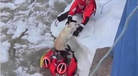 coast guard rescues dog from icy lake