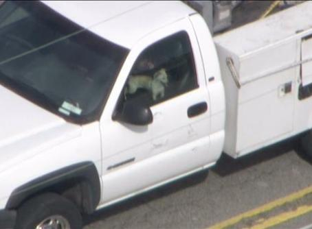 dog in truck window car chase