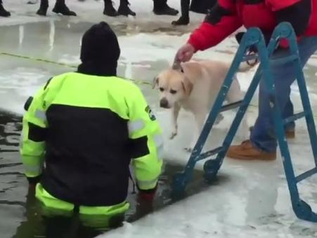 dog in polar plunge