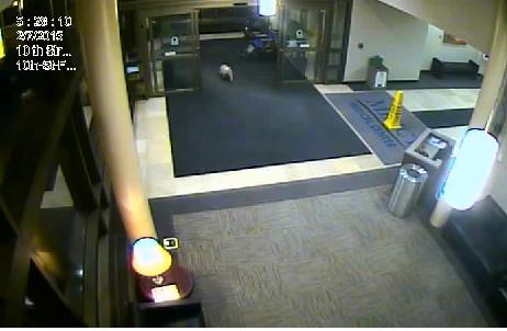dog walks to hospital