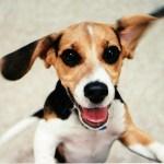 Milk-Bone Survey Ranks the Most Puppy-Loving US States (Congrats, California)