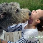 Erin Go Bark: The Most Popular Irish Dog Breeds and Names