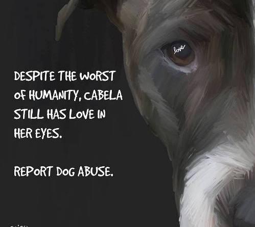 cabela dog abuse poster