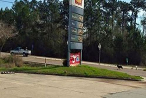 dog dumped at gas station chases truck