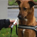 5 Cancers Dogs Can Sniff Out with Amazing Accuracy