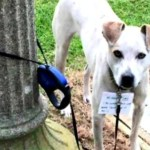 Homeless Woman Walks 3 Miles in Storm to Take Abandoned Dog to Shelter