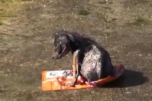 jordan puppy thrown in l.a. river