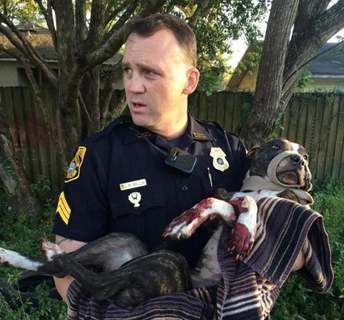 tampa police save dog shot and tied to train tracks