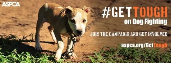 aspca get tough dog fighting campaign