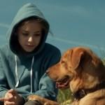 'White God' Stars 250 Former Shelter Dogs