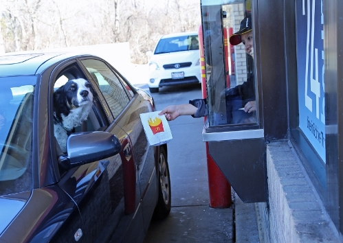 dog at drive-thru window