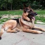 NJ Cop at Wrong Address Kills German Shepherd