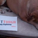 Help the ASPCA 'Get Tough' on Dog Fighting