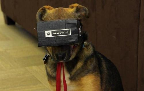 pawculus rift virtual reality for dogs