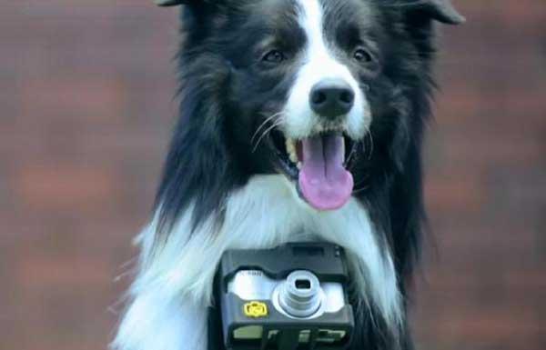 Grizzler Heartology photographer dog