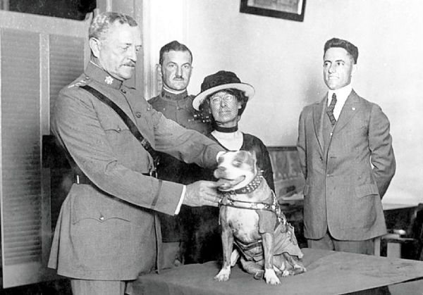 sergeant stubby awarded medals