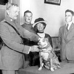 15 Fascinating Facts About Sgt. Stubby, the Most Decorated US Military Dog