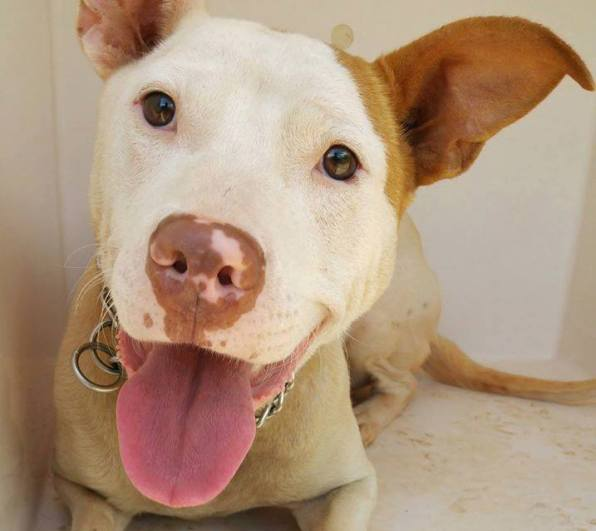 cute dog with flu killed by Clayton County shelter
