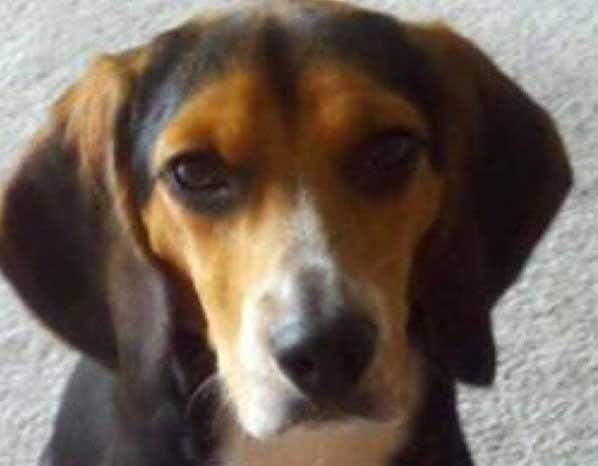 Virginia Man Tries To Rehome Dog Disliking Girlfriend On Craigslist