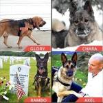 Vote for Your Favorite 2015 AHA Hero Dog Awards Finalists