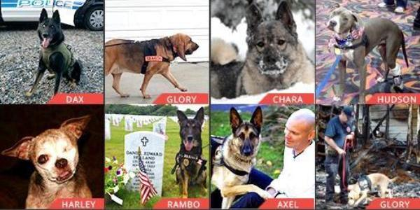 AHA Hero Dog Awards