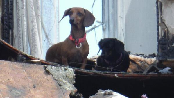 dachshunds survived Pennsylvania house fire
