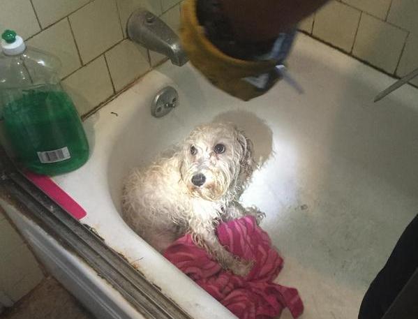 dog with paw stuck in bathtub drain