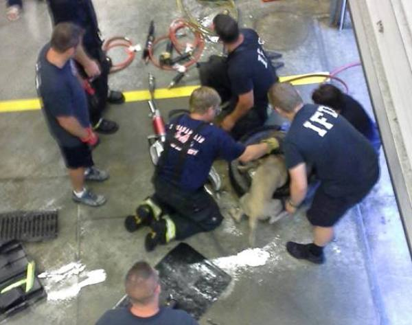 firefighters help dog stuck in tire