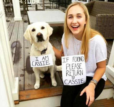 Lost4Dogs Fourth of July campaign Cassie